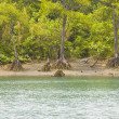 Stock Photo: mangrove forest&quot