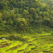 banaue rice terraces — Stock Photo