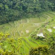 Rice Paddies — Stock Photo