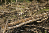 Forest Destruction — Stock Photo