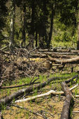Forest Destruction — Stock Photo