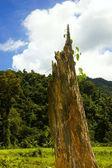 树桩 — 图库照片