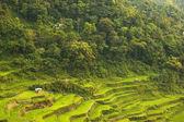 Banaue Rice Terraces — Stock Photo