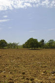 Newly tilled soil — Stock Photo