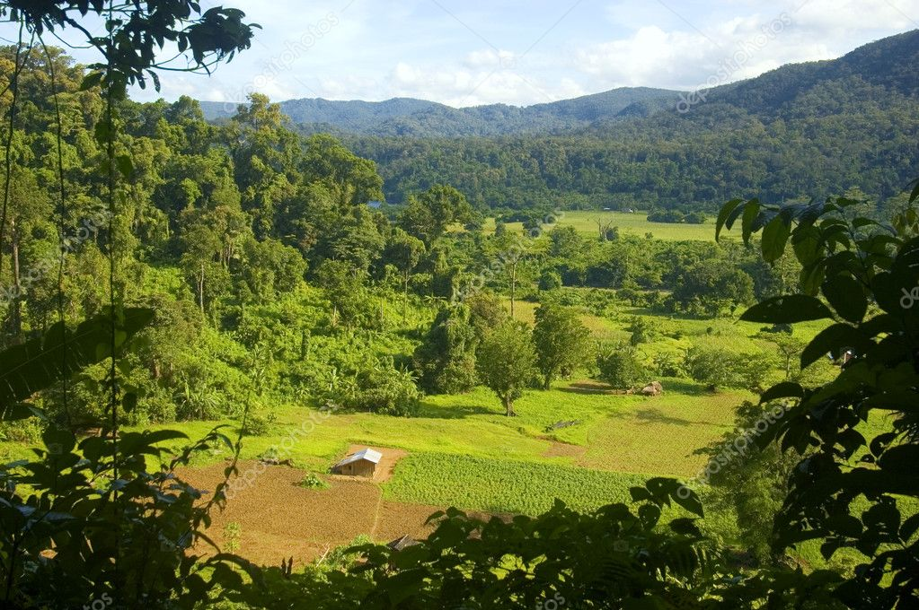 A view from the rain forest of Palanan, Isabela, Philippines — Stock Photo #6272474
