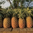 Pineapple — Stock Photo #6284236
