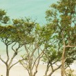 Aurora Beach — Stock Photo