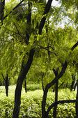 木々 や茂み — ストック写真