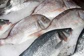 Fish at market — Stock Photo
