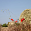 Stock Photo: Bail of hay and poppies