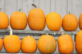 Pumpkins on Shelves — Stock Photo