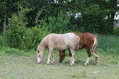 Horses in Small Pasture — Stockfoto