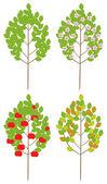 Apple-trees — Stock Vector