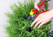 Pruning — Stock Photo