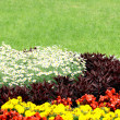 Flowerbed — Foto Stock
