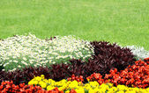 Flowerbed — Photo
