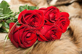Red roses on the fur. — Stock Photo