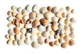 Seashells — Stockfoto