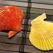 Two seashells — Stockfoto