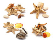 Sea stars set. — Stock Photo