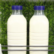 Bottles of fresh milk in the fridge with grass background - Stock Photo