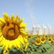 Royalty-Free Stock Photo: Sunflowers field and power plant