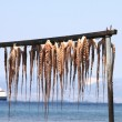 Stock Photo: Fresh octopus hanging up to dry