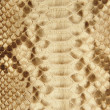 Portrait of snake skin. — Stockfoto