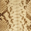 Portrait of snake skin. - Stock fotografie