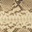 Portrait of snake skin. - Stock Photo