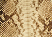 Portrait of snake skin. — Stock Photo