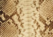 Portrait of snake skin. — Stock Photo