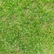 Stock Photo: Beautiful green grass texture from golf course