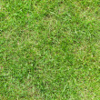 Beautiful green grass texture from golf course - Stock Photo