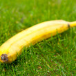 Banana in the grass. — 图库照片