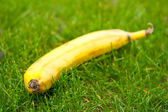 Banana in the grass. — Foto Stock