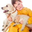 Stock Photo: Handsome Young Boy Playing with His Dog Against White Background