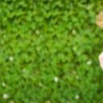 Smiling beautiful woman laying on grass — Stock Photo #6251258