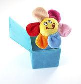 Flor de gato en la caja — Foto de Stock
