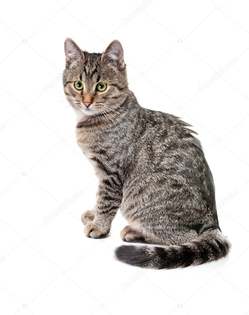 Striped kitten with white speck, on white — Stock Photo #5938095