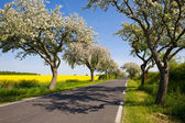 Landscape with blossom apple tree, — Stock Photo