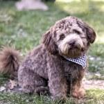 Funny small dog — Stock Photo