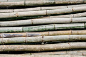 Old bamboo — Stock Photo