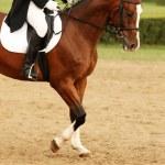 ������, ������: Horse riding