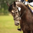 Stock Photo: Equestrian