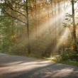 Sunlight shining through trees — Stock Photo #5912985