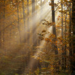 Sunlight shining through trees - Stock Photo