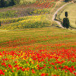 Tuscan landscapes — Stockfoto