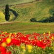 Tuscan landscapes — Stock Photo