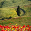 Tuscan landscapes - Stock Photo